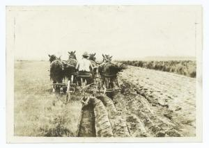 old-plowing-team