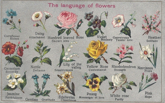 language, or symbolism of flowers  foundation truths, Natural flower